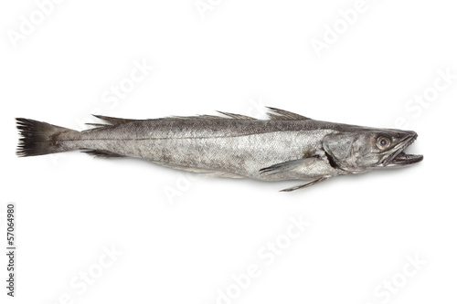 Poster Vis Single fresh Hake fish