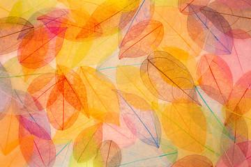 FototapetaAbstract autumn background