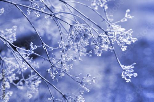 Fotografie, Obraz  Frozen umbrella flowers background