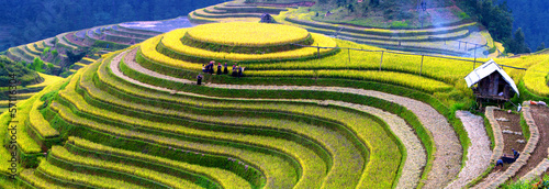 Foto op Aluminium Bali Terraced rice fields
