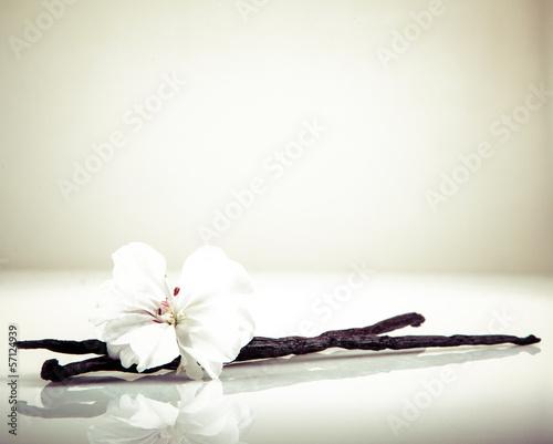 waniliowa-fasola-i-kwiat