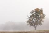Herbst - 57145718