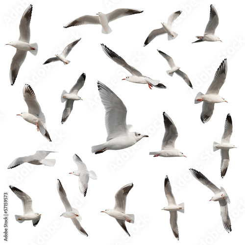 birds collection isolated on white Wall mural