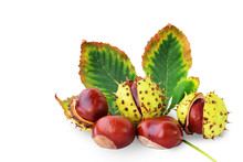 Horse-chestnuts Fruits And Lea...