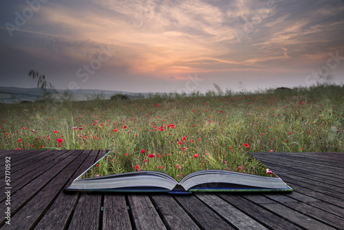 Fotobehang Khaki Creative concept pages of book Poppy field landscape in Summer c