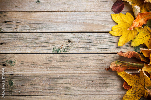 Obraz Autumn leaves - fototapety do salonu