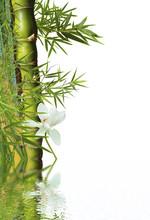 Décor Aquatique : Bambou Et F...