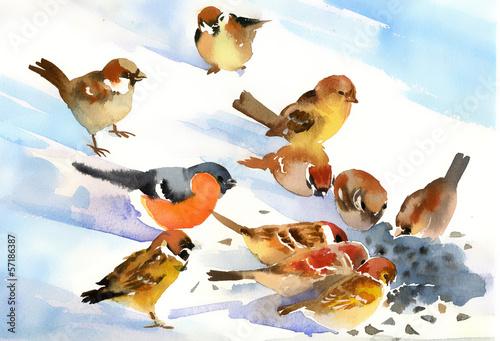 ptaki-jedza-nasiona-na-sniegu