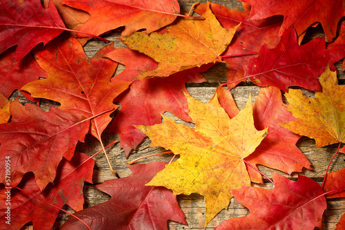 Jesienne liście na drewnianym tle