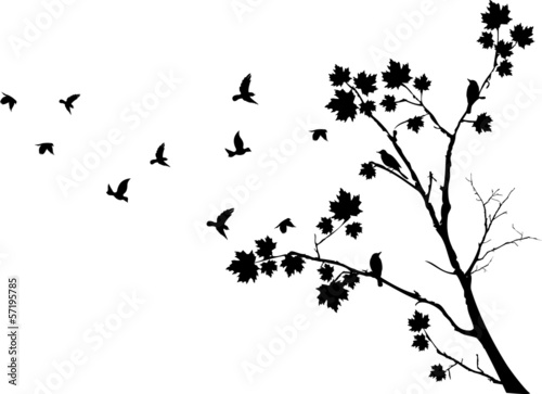 sylwetka-drzewa-jesien-z-latajacych-ptakow