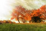 Fototapeta Natura - Autumn landscape