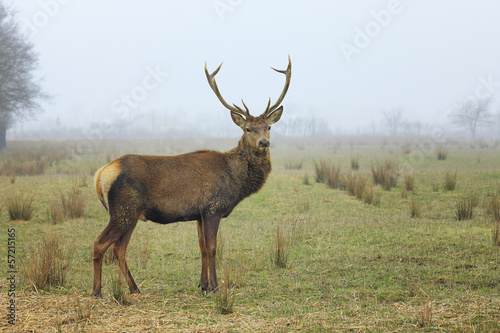 Deurstickers Hert View of red deer