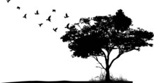 Tree Silhouette With Birds Fly...