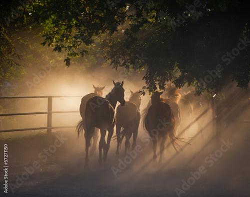 Foto op Canvas Paarden herd of horses