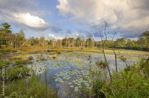 Fotografie, Obraz  Swamp at Canoe Meadows in Pittsfield, Massachusetts