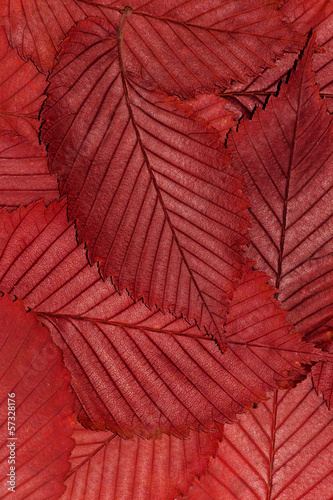background,  leaves - 57328176