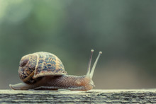 Close Up Of A Small Snail