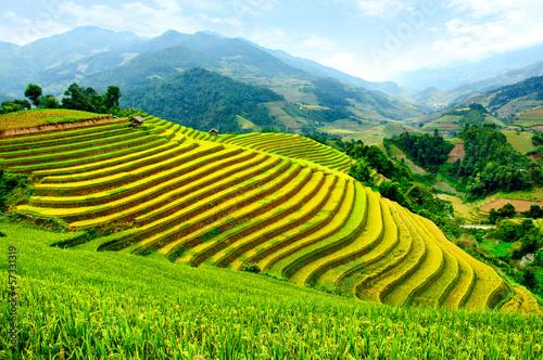 Fotobehang Rijstvelden Rice fields on terraced of Mu Cang Chai, YenBai, Vietnam.