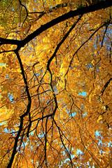 FototapetaAutumn leaves