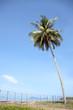 Coconut Palm Tree on the Tropical Beach, Thailand.