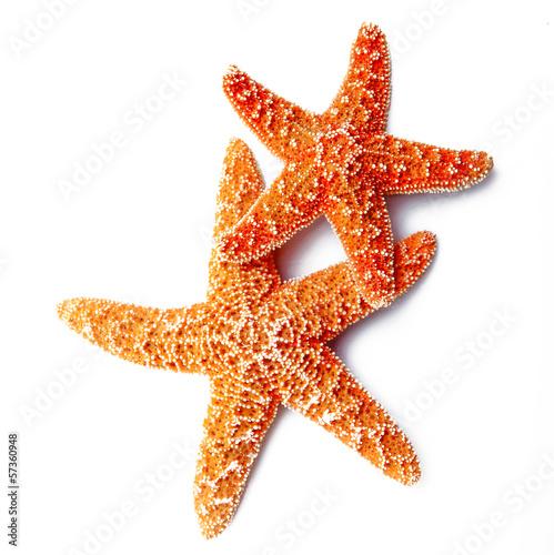 stelle marine in fondo bianco Wallpaper Mural