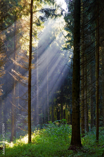 promienie-slonca-w-tajemniczym-lesie