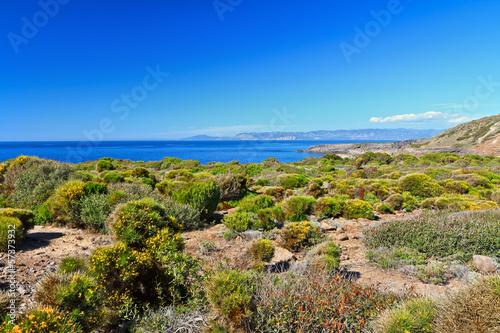 Fotografía  Mediterranean flora - Sardinia