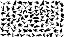 Set Of 100 Silhouettes Of Birds