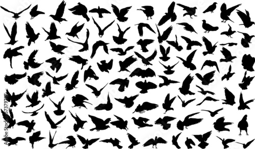 Set of 100 silhouettes of birds Canvas Print