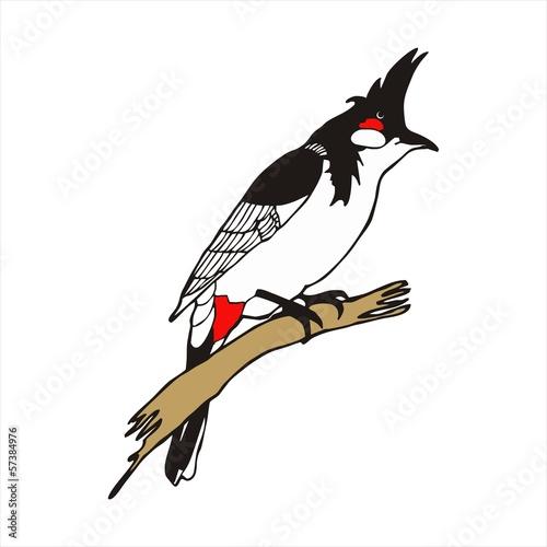 Photo  Red-whiskered bulbul bird vector