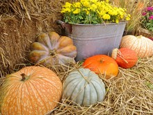 Pumpkins And Autumn Flowers Sitting On Hay Bales
