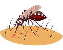Mosquito Cartoon Sucking Blood From Human Skin
