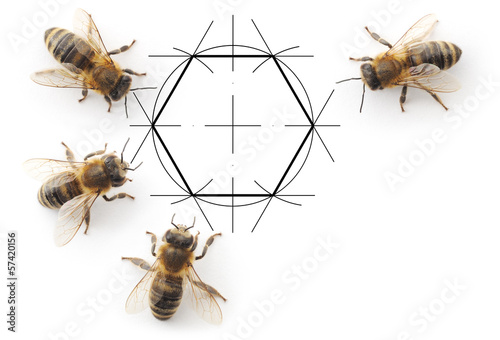 Poster Bee bees and drawing honeycombs