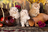 Słodkie kociaki i martwa natura