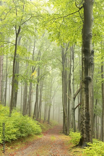 Fotobehang Natuur Forest trail, foggy weather in late September