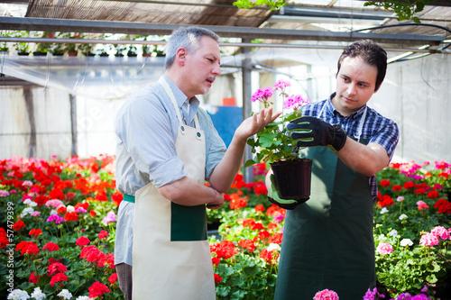 Papel de parede Greenhouse workers holding flower pots