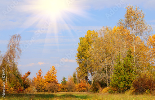 Tuinposter Herfst Autumn scene with sun