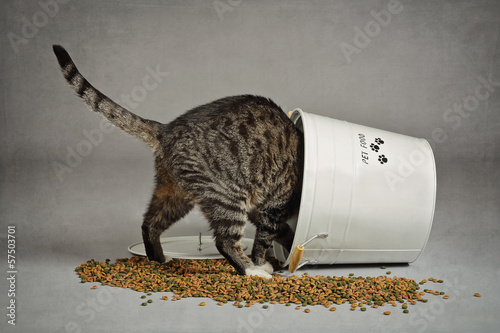 Photo chat volant dans seau à croquettes