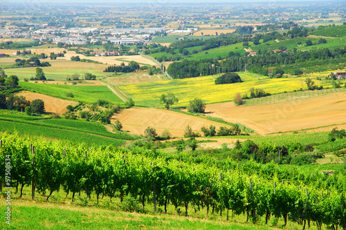 Tuinposter Geel Italy, Romagna Apennines hills and vineyards