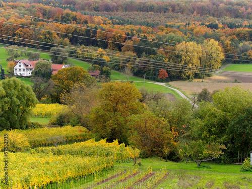 Fotobehang Wijngaard Weinanbau im Herbst