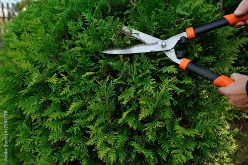 Fotografía  Pruning bushes