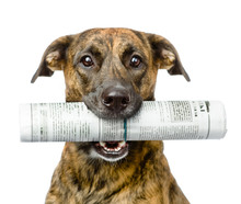 Dog Carrying Newspaper. Isolat...