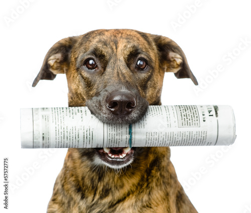Poster Chien dog carrying newspaper. isolated on white background
