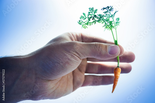 Fotografia, Obraz  Tiny carrot