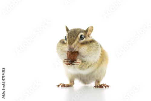 Fotoposter Eekhoorn アーモンドを食べるシマリス