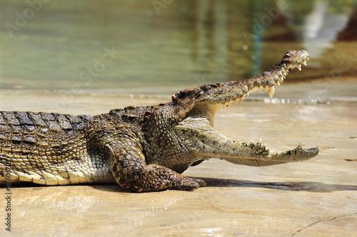 Foto op Plexiglas Krokodil Close up of crocodile