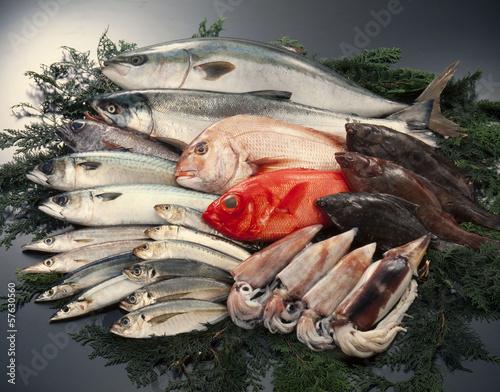 Staande foto Vis 魚介類