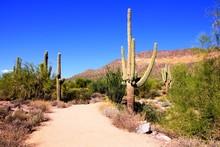 Trail Through A Desert Park Near Phoenix, Arizona