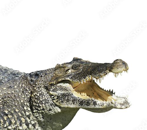 Papiers peints Crocodile Crocodile With Open Mouth