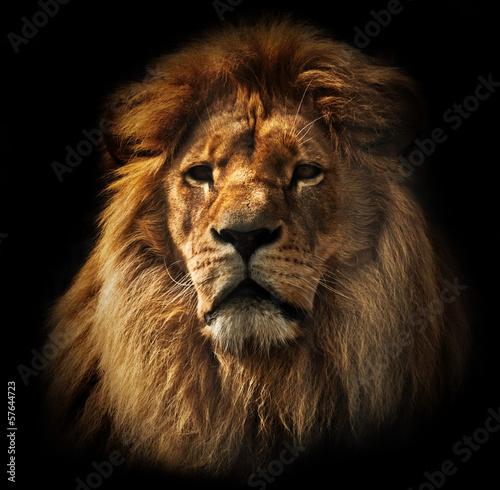 Staande foto Leeuw Lion portrait with rich mane on black